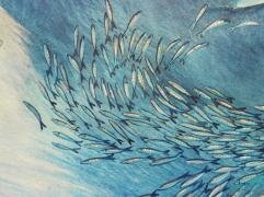 détail sardin 2