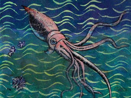 calamar géant_web