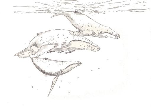 baleine et habitants