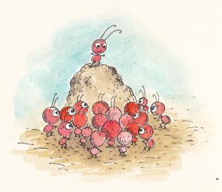 fourmis!!! très rouge